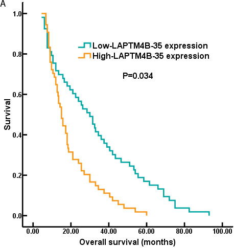 The survival curves of NSCLC patients with LAPTM4B-35 protein expression.