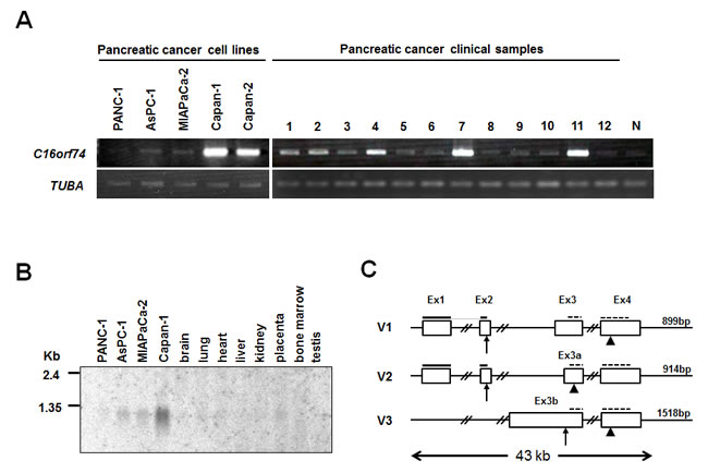 Up-regulated expression of