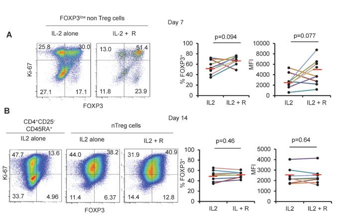 Rapamycin does not prevent FOXP3 downregulation.