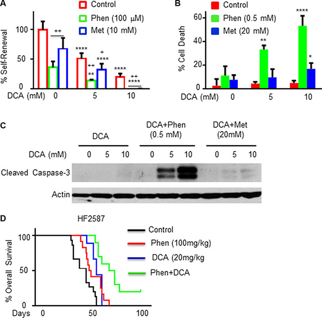 DCA treatment increases the inhibitory effect of phenformin on the stemness and survival of GSCs in vitro and in vivo.