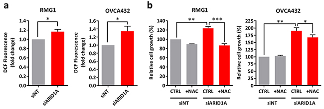Knockdown of ARID1A expression in ARID1A-wildtype ovarian cancer cells results in increased intracellular ROS levels and cell growth.