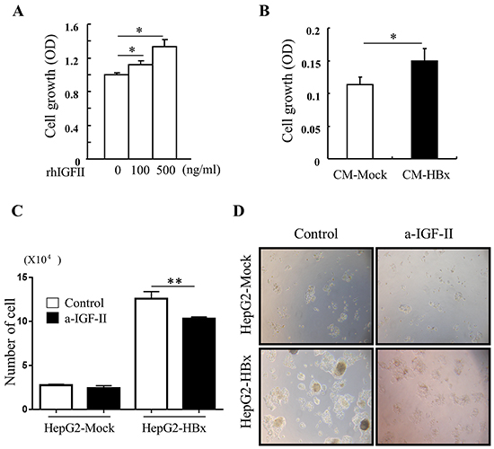 IGF-II induces cell growth and IGF-II neutralization reverses abnormal cell growth A. cell growth was measured in serum starved HepG2-Mock cells treated with rhIGF-II (0-500 ng/ml) for 24 h.