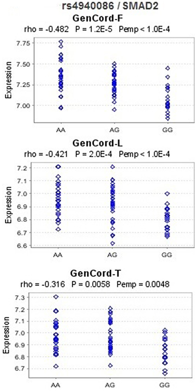 eQTL analysis for rs4940086 and SMAD2 in the Geneva GenCord study.