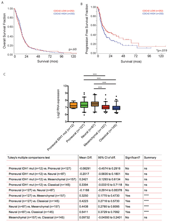 Cdc42 expression level does not predict patient survival with GBM but is associated with poor progression free survival.