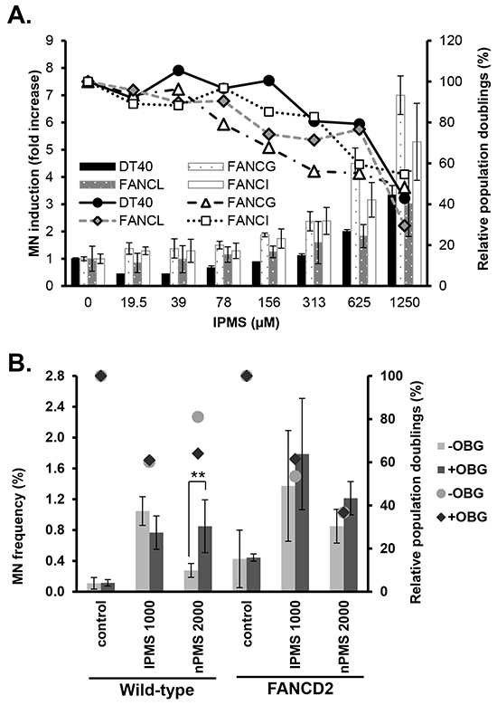 Micronucleus induction in wild-type and FANC-deficient cells treated with IPMS.