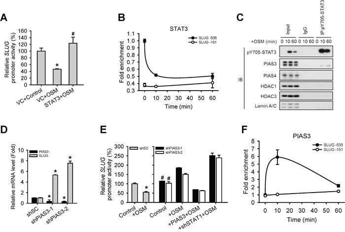 PIAS3 suppressed the STAT3-mediated expression of SLUG.