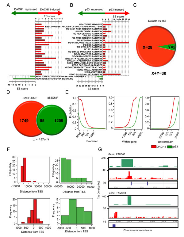 p53 and DACH1 regulate common functional gene modules and bind common genes in ChIP-Seq.