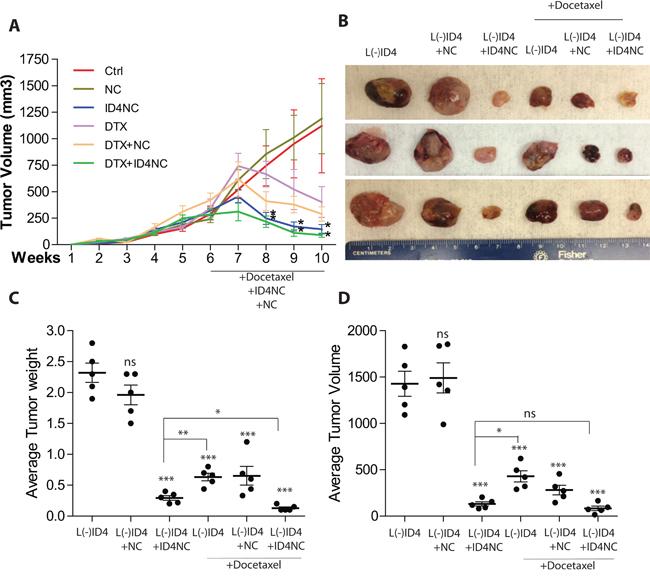 ID4 nano carriers blocks tumor growth in vivo.