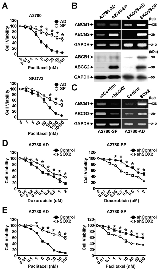 SOX2 expression is important for maintaining chemoresistance in ovarian cancer cells.
