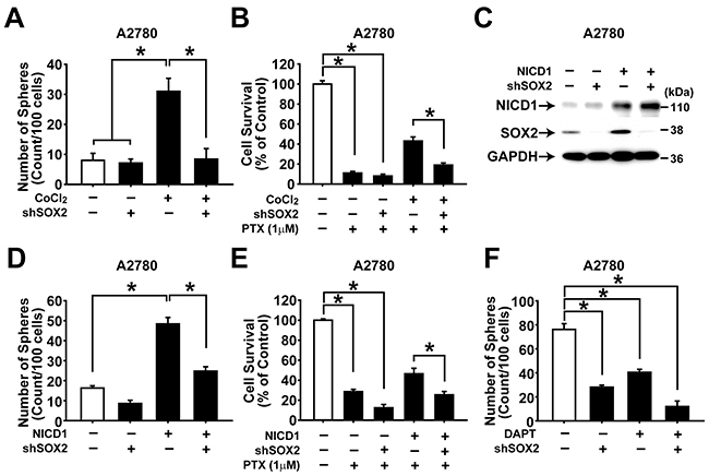 NOTCH1 and SOX2 are important for maintaining CSC properties in ovarian cancer cells.