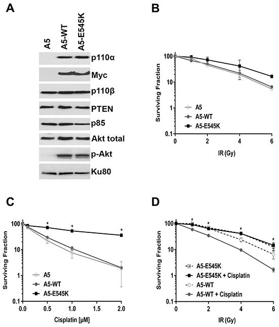 HeLa cells expressing PIK3CA-E545K are resistant to cisplatin