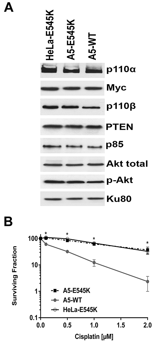 HeLa cells stably expressing both PIK3CA-E545K and PIK3CA-WT are resistant to cisplatin