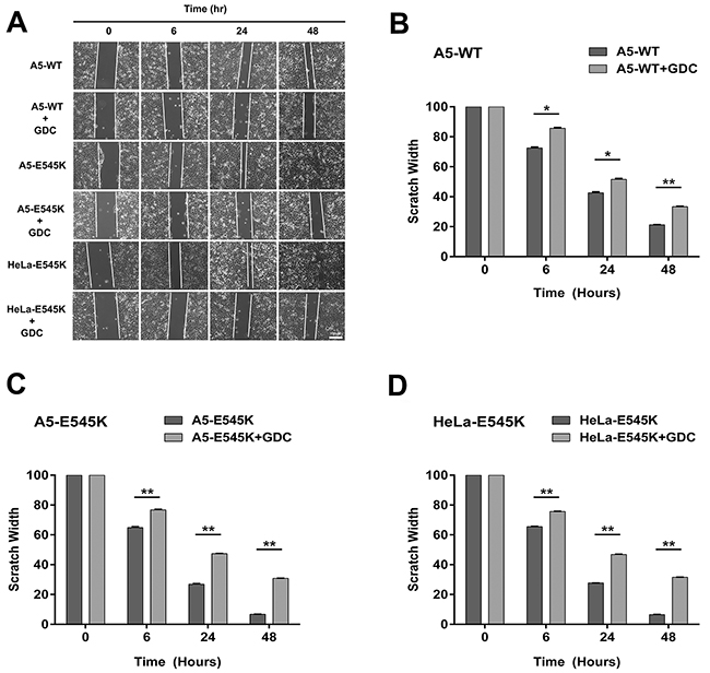 Stable cells expressing PIK3CA-E545K have a more migratory phenotype that is reversed by GDC-0941