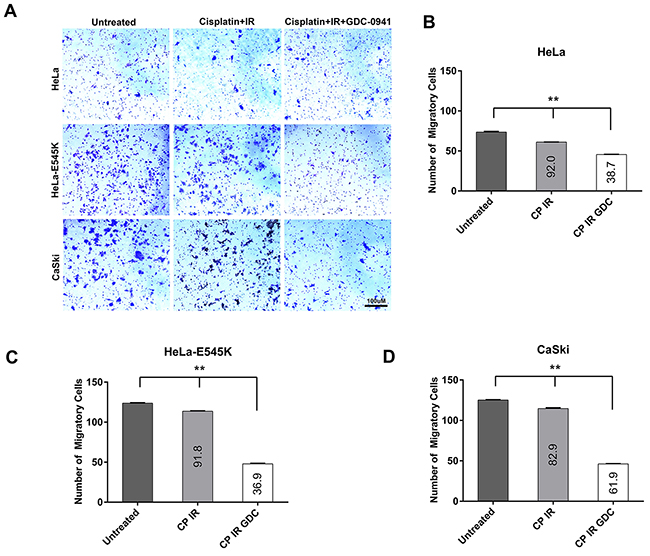 Cervical cancer cells expressing PIK3CA-E545K have a more migratory phenotype in transwell migration assays.