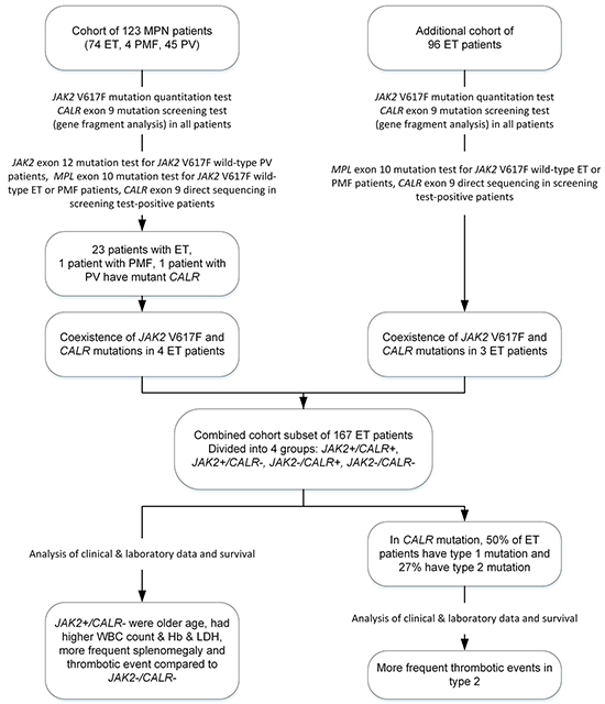 Flow chart describing the patient cohorts analyzed in this study.