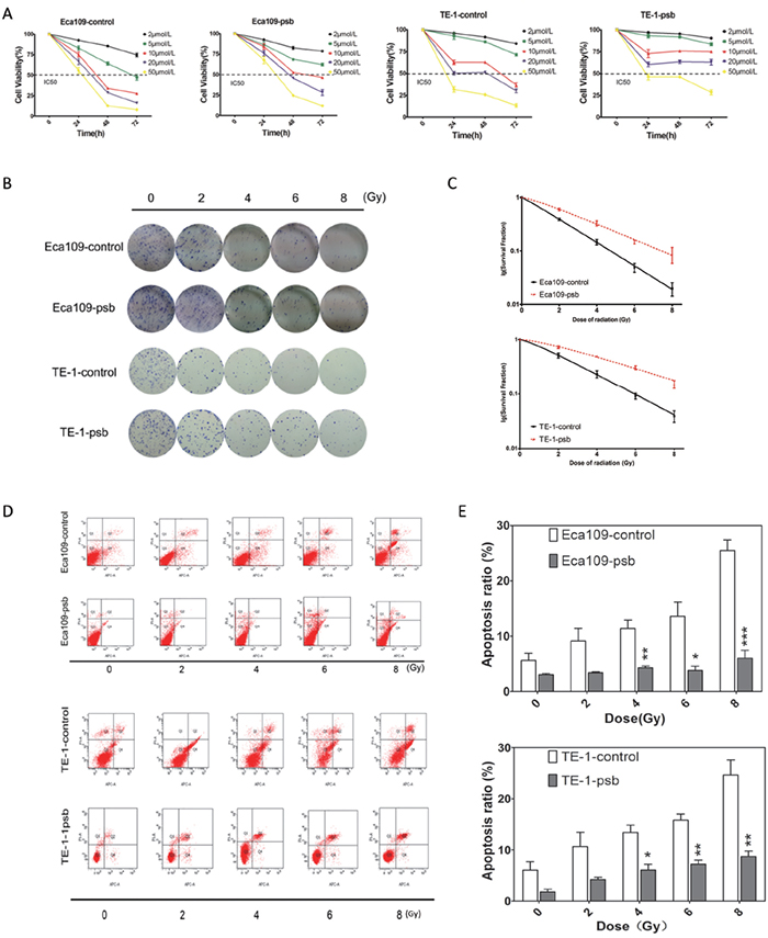 HPV16 E6-E7 increases chemoresistance, radioresistance and anti-apoptosis ability after ionizing radiation in ESCC cells.