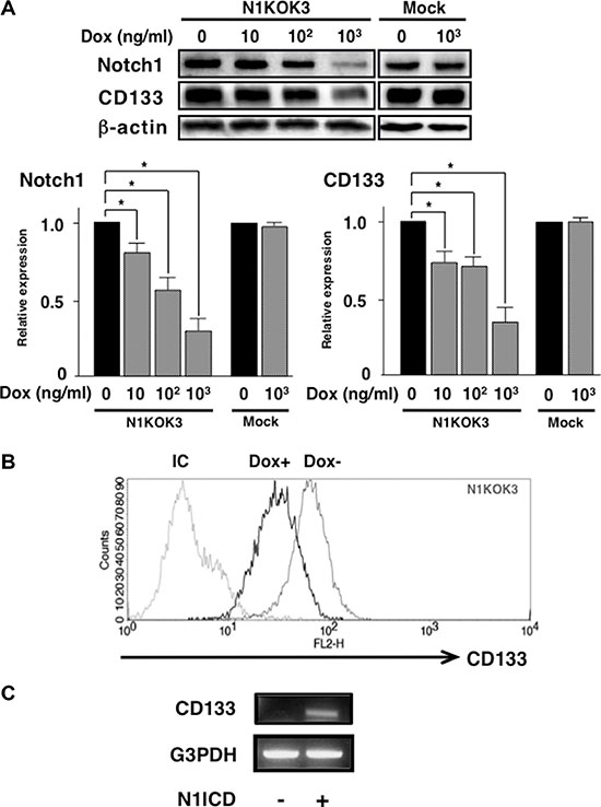 Silencing Notch1 led to reduced CD133 expression.