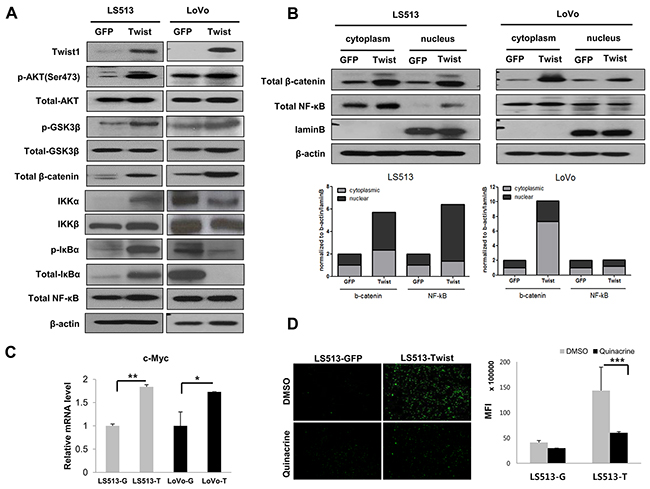 Twist1 activated the AKT signaling pathway in MSS LS513 and MSI LoVo colon cancer cell lines.
