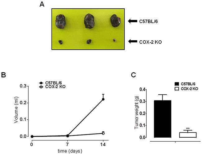 COX-2 is essential for melanoma development in mice.