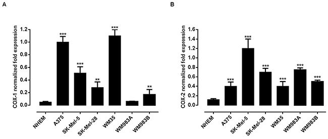 Expression of COX-1 and COX-2 in human melanoma cell lines.