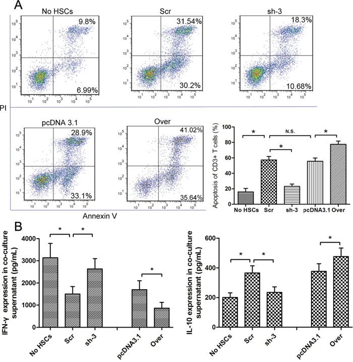 The expression of galectin-1 in HSCs promotes HSC-induced T cell apoptosis and Th1/Th2 cytokine balance skewing.