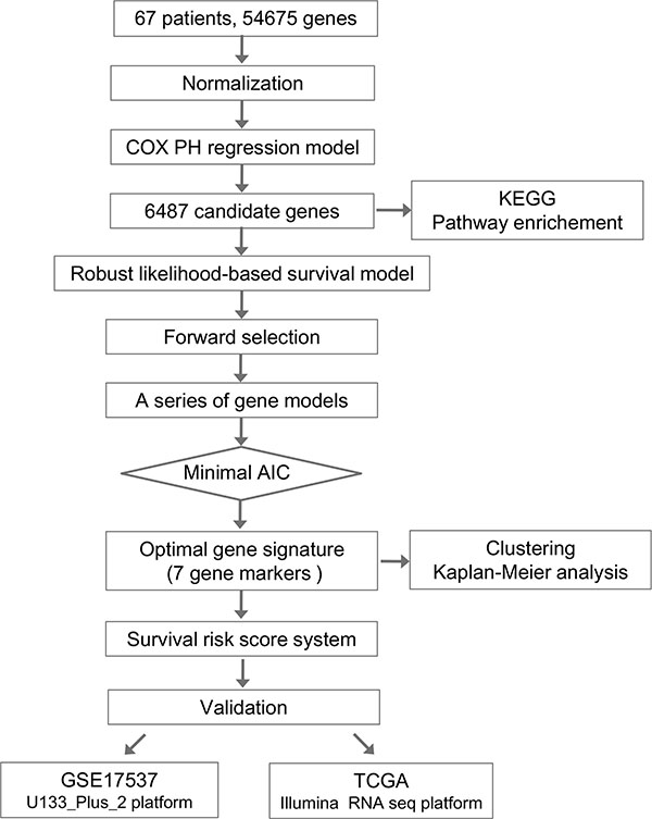 Flow chart of methods for building the seven-gene signature based on 64 Chinese colorectal cancer (CRC) samples.