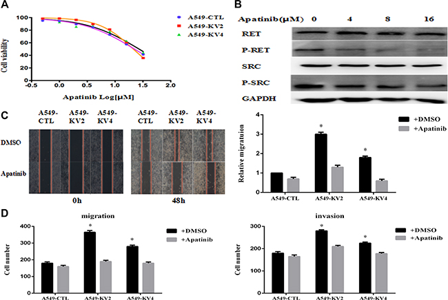 Apatinib inhibited cell proliferation, migration and invasion of KIF5B-RET transfected A549 cells.