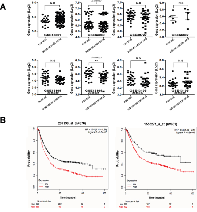 Correlation between tumorigenesis and hTERT expression in gastric cancer patients.
