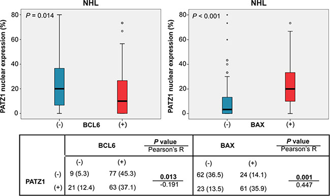 PATZ1, BCL6 and BAX correlation in NHL cohort.