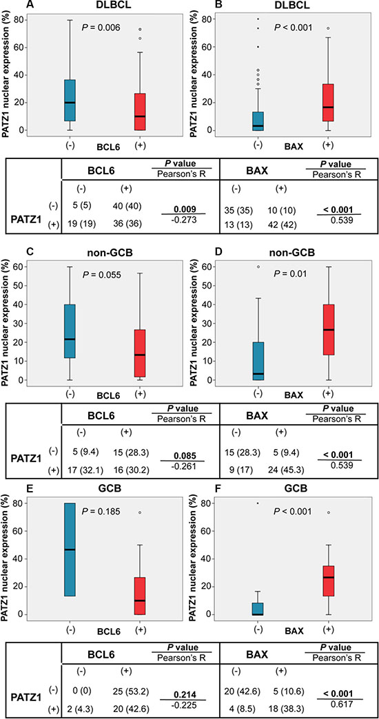 PATZ1, BCL6 and BAX correlations in DLBCLs.