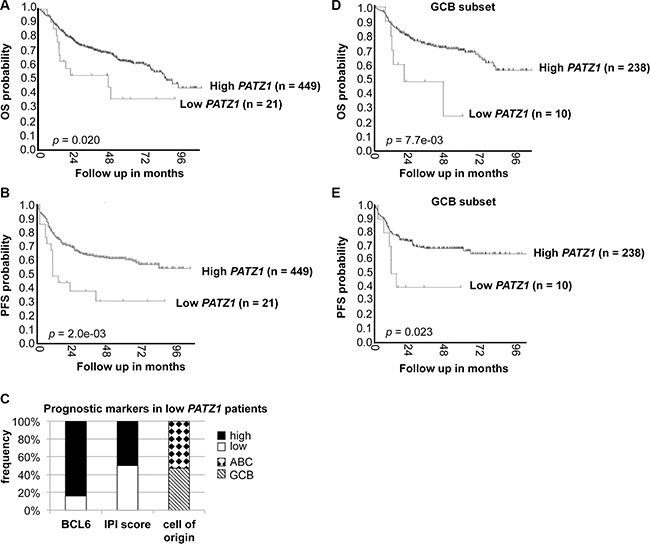 PATZ1 gene expression correlates with survival in DLBCL patients treated with R-CHOP.