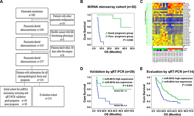 Screening, validation and evaluation of miR-891b as a prognostic predictor for PDAC.