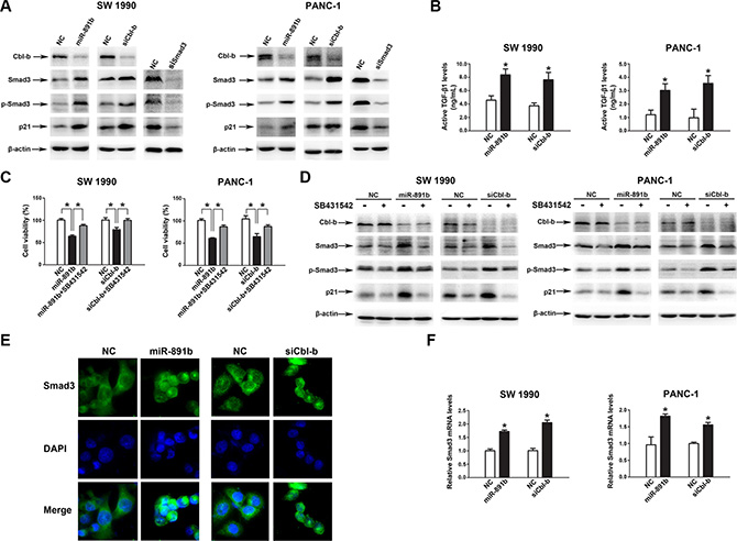 MiR-891b targeted the regulation of the downstream signal molecules of Cbl-b.