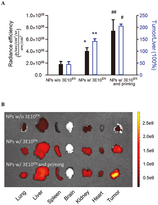 3E10EN mediates autocatalytic, tumor-targeted delivery of nanoparticles.