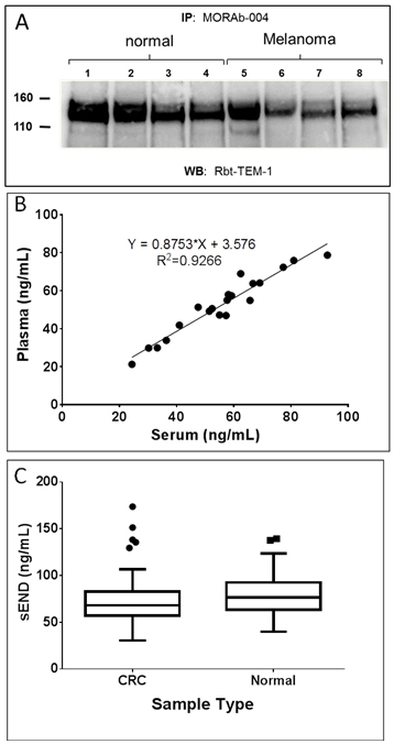 Detection of soluble endosialin/TEM-1 (sEND) in human serum.