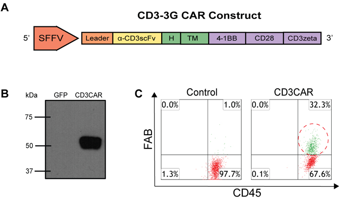 CD3CAR NK-92 functional validation