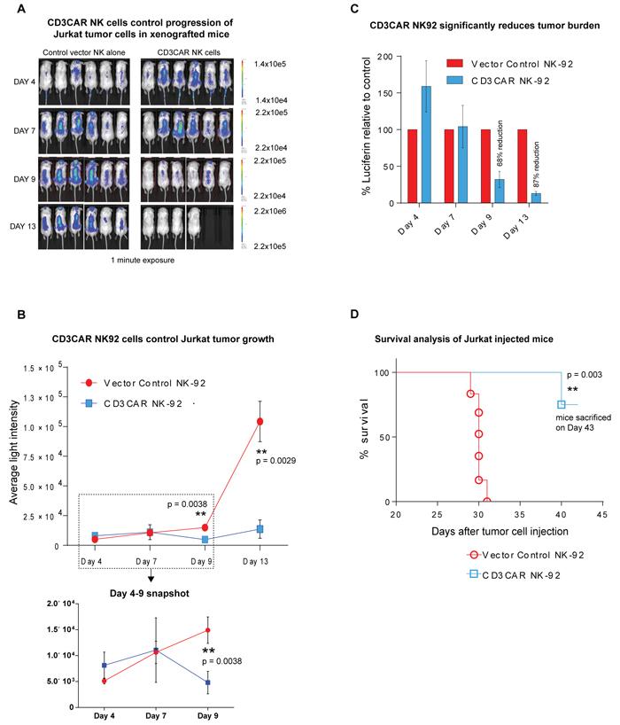 CD3CAR NK-92 cells demonstrate profound anti-leukemic effects