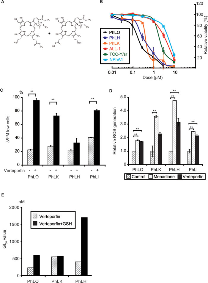 Verteporfin showed strong anti-leukemic effects through light-independent ROS production.