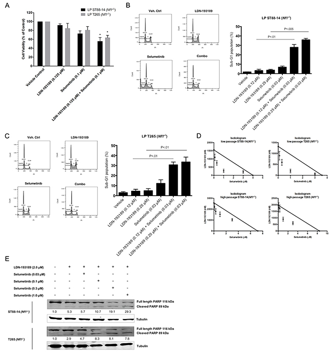Combinatorial treatment with LDN-193189 and selumetinib results in increased cell death and decreased proliferation of MPNST cells.