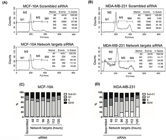 The knockdown of the network target induces cell death in MDA-MB-231 cells.