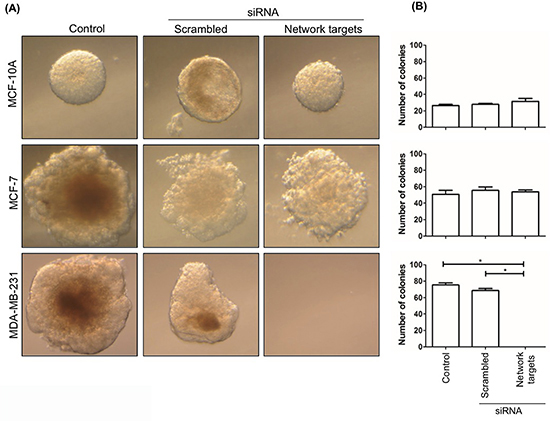 The knockdown of the network targets decreases the growth of MDA-MB-231 cells in soft agar.