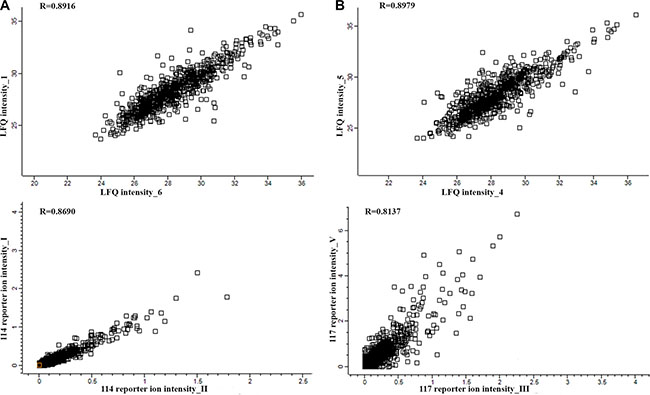 Representative correlation plots comparing the LFQ intensities and iTRAQ reporter ion intensities of two biological replications for the CR/VGPR (A) and < VGPR (B) groups.