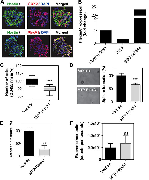 MTP-PlexinA1 inhibits cancer stem cells-dependent tumor growth.
