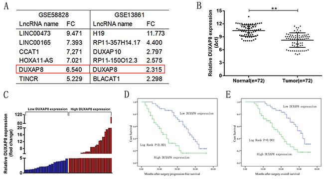 Relative DUXAP8 expression in GC tissues and its clinical significance.