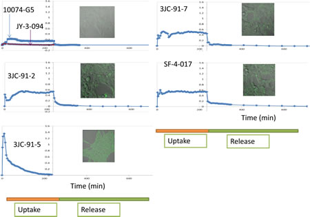 Live cell uptake and release of 10074-G5 and select Group B compounds.