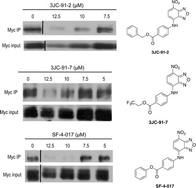 Co-IPs of Myc-Max complexes from HL60 cells.