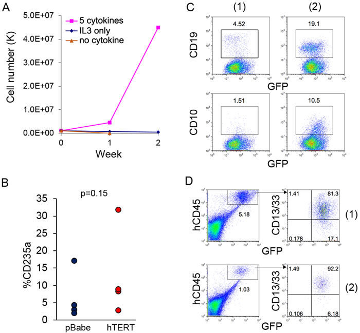 Expression of hTERT does not lead to direct leukemia transformation of AE cells.