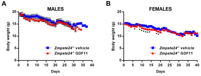 rGDF11 therapy does not prevent body weight loss of