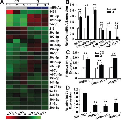 Oncotarget Up Regulation Of Microrna Let 7c By Quercetin Inhibits