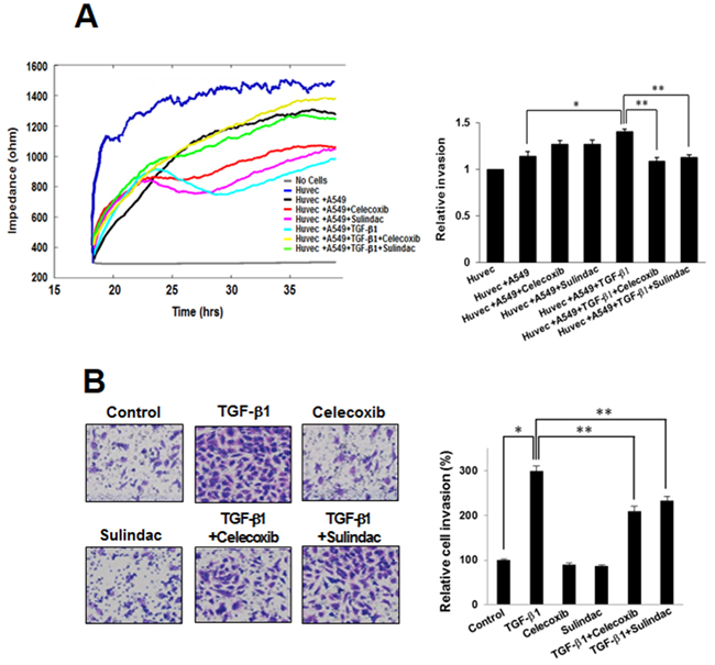 Effects of celecoxib and sulindac on transforming growth factor (TGF)-β1-induced A549 cell invasion.